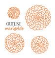 set of four outline orange marigolds vector image