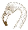 engraving flamingo vector image vector image