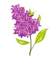 cartoon lilac spring flower vector image