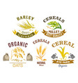 cereal icon set with wheat rye oat and millet vector image vector image