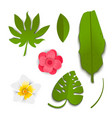 exotic tropical leaves and flowers in paper style vector image