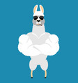 lama alpaca strong cool serious animal smoking vector image