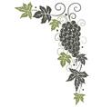 Vine grapes border vector image vector image