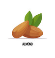 almond nut with leaves isolated on white vector image