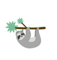 cute funny sloth hanging on palm tree branch vector image vector image