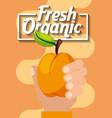 hand holding fresh organic fruit peach vector image