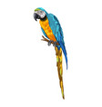 macaw parrot vector image vector image