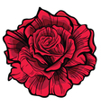 Red rose Isolated flower on white background vector image