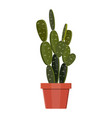cactus plant in flower pot decoration home plant vector image