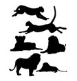 cheetah and lion wild animal silhouette vector image