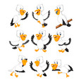 collection of the white pelicans vector image