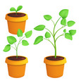 different stages growing young plant botanical vector image vector image