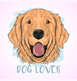 dog cute golden vector image