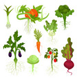 flat set of vegetables with roots healthy vector image vector image