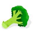 green broccoli icon set isometric style vector image