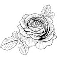 rose flower with leaves vector image vector image