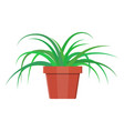 grass plant in flower pot decoration home plant vector image vector image