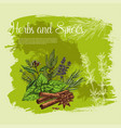 poster of thyme spice basil rosemary herb vector image vector image