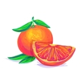 Grapefruit hand drawn on a white background vector image