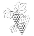 a branch is a beautiful grape berry a tasty plant vector image vector image