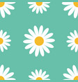 big white daisy chamomile cute flower plant vector image vector image