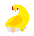Chicken sitting on eggs Farm bird nests baby birds vector image