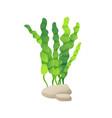 marine or decorative aquarium algae