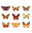 set beautiful butterfly vector image vector image