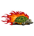 turtle isolated on white background vector image vector image