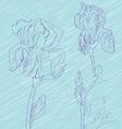 iris flowers tile vector image