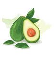 avocado green fresh vector image