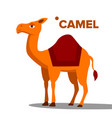 camel funny animal isolated flat cartoon vector image