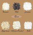 different types of rice vector image vector image