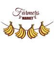 farmers market bananas vector image vector image