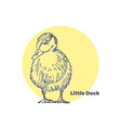 hand drawn sketch of little cute duck with vector image vector image