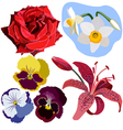 Set of flowers without gradient vector image vector image
