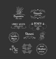 set of handdrawn floral logos vector image vector image