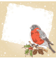 Christmas hand drawn postcard with bullfinch bird vector image vector image