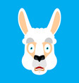 lama alpaca scared omg face avatar animal oh my vector image