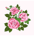 pink roses bouquet isolated on the white vector image