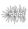 sea buckthorn cute medicinal plant healthy berry vector image