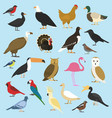 set domestic birds and tropical animals vector image vector image