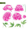 set peony flowers elements vector image