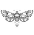 black and white decorative vector image vector image