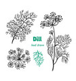 dill plant hand drawn vector image vector image