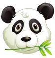 face cute panda eating bamboo leaves vector image