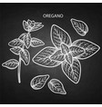 graphic oregano set vector image