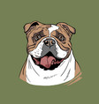 bulldog portrait cartoon style vector image