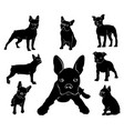 silhouette of boston terrier vector image