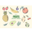 fresh organic fruits market vector image